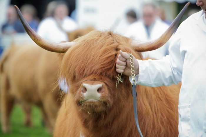 Royal Highland Show 2018 Royal Highland Show Edinburgh things to do Edinburgh whats on Edinburgh whats on in Edinburgh Event Edinburgh