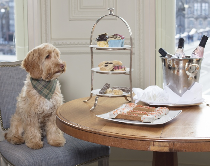 Edinburgh Dog Friendly Hotels Little Black Book Edinburgh