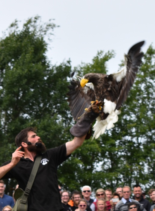 Royal Highland Show falconry